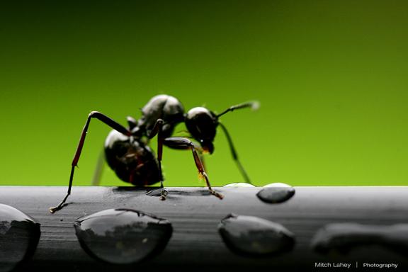 """""""Hingga apabila mereka sampai di lembah semut berkatalah seekor semut: Hai semut-semut, masuklah ke dalam sarang-sarangmu, agar kamu tidak diinjak oleh Sulaiman dan tentaranya, sedangkan mereka tidak menyadari."""" QS. Al-Naml:18"""